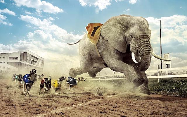 Grappige wallpaper met rennende olifant