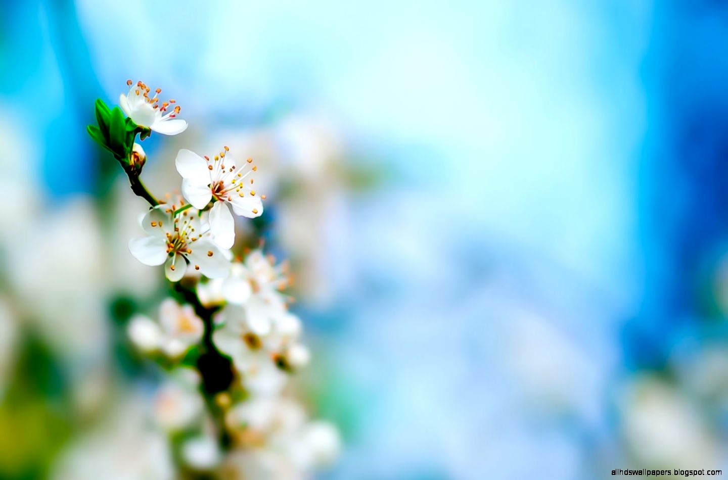 spring wallpaper white flowers image all hd wallpapers