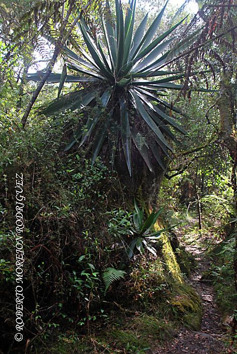 un paso dificil en el camino al  Pico Turquino