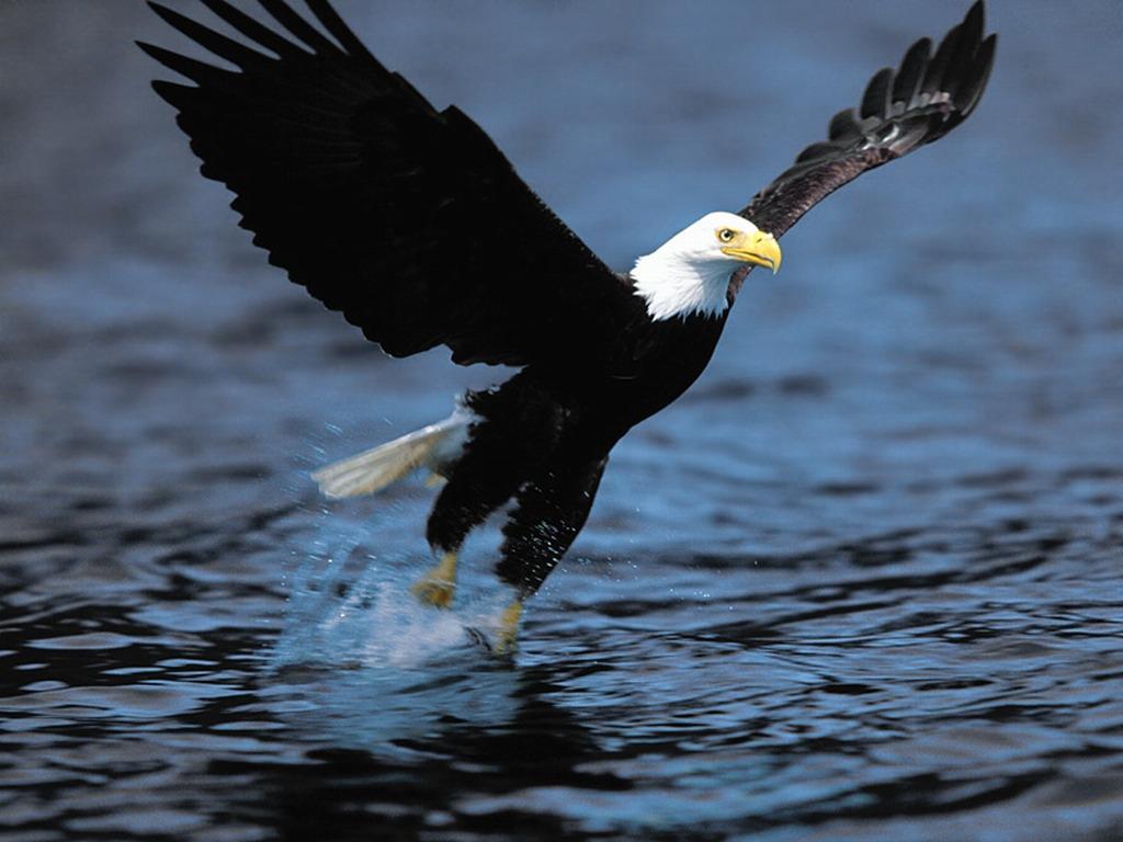 http://3.bp.blogspot.com/-XsoTfL4_p84/UN3qFx9xPfI/AAAAAAAAJYo/SO5QbAYrkkE/s1600/Bald_eagle_Haliaeetus_leucocephalus.jpg