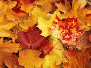 Bellas hojas de maple de colores. Wallpaper de varias hojas de diferentes . bellas hojas de maple de colores