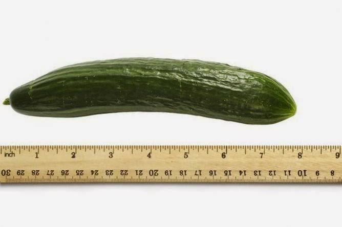 rata-rata panjang penis