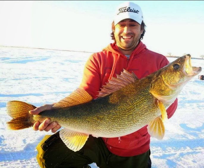 Big fishes of the world walleye sander vitreus for Walleye fishing minnesota