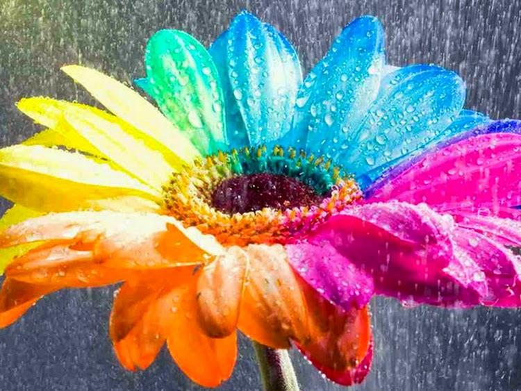 Colorful Flower in Rain Drops