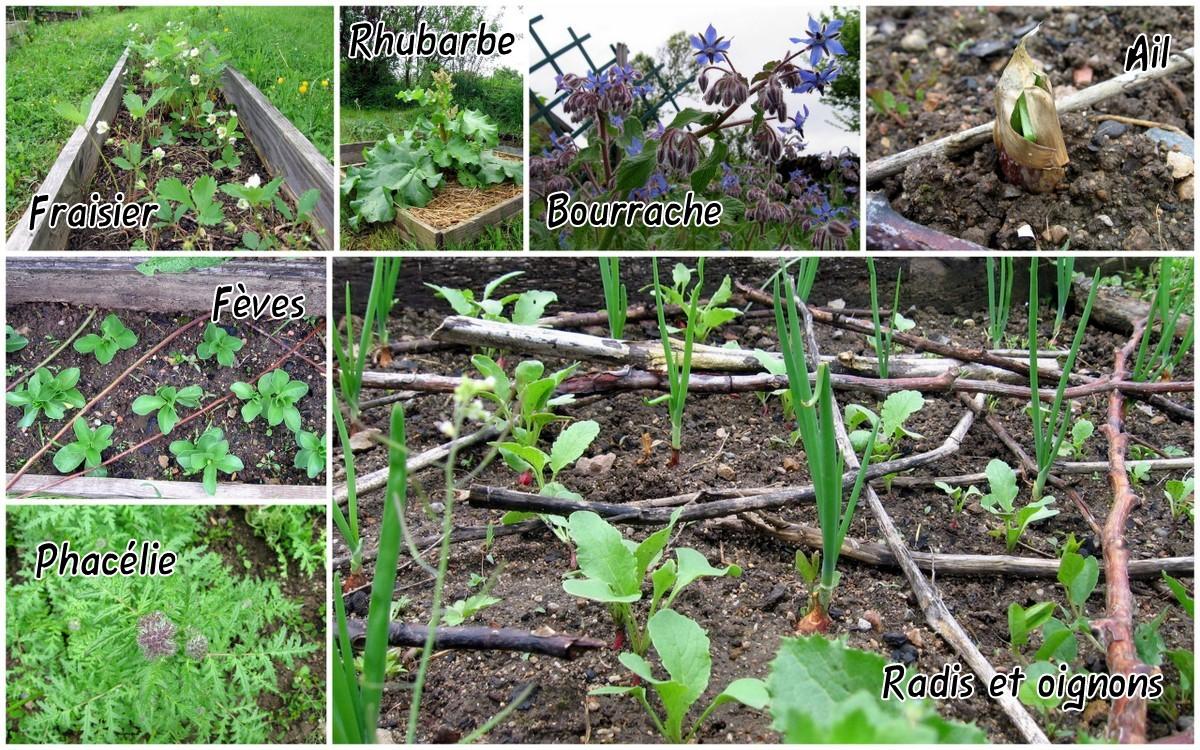 La petite maison dans la campagne toujours au jardin for Plantation au jardin