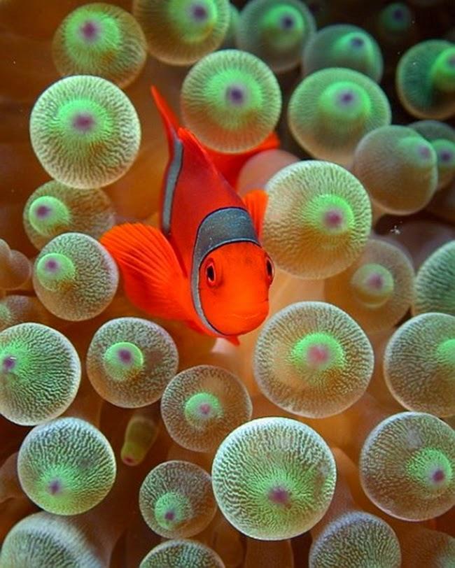 أجمل الأسماك الاستوائية الملونة   - صفحة 4 Colorful-tropical-fishes-32
