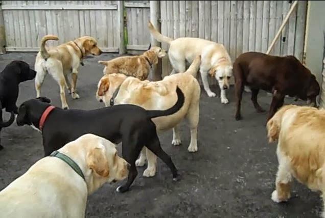 Lotsa Dogs Lotsa Fun