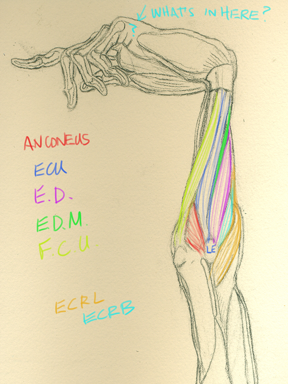 Human Anatomy for the Artist: A Beautiful Exaggeration: More Student ...