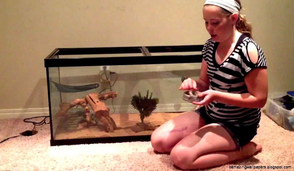 Bearded Dragon Pets