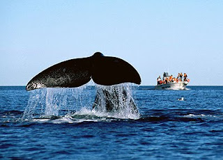 Whale Watching Season in Península Valdés - Puerto Pirámides and Puerto Madryn