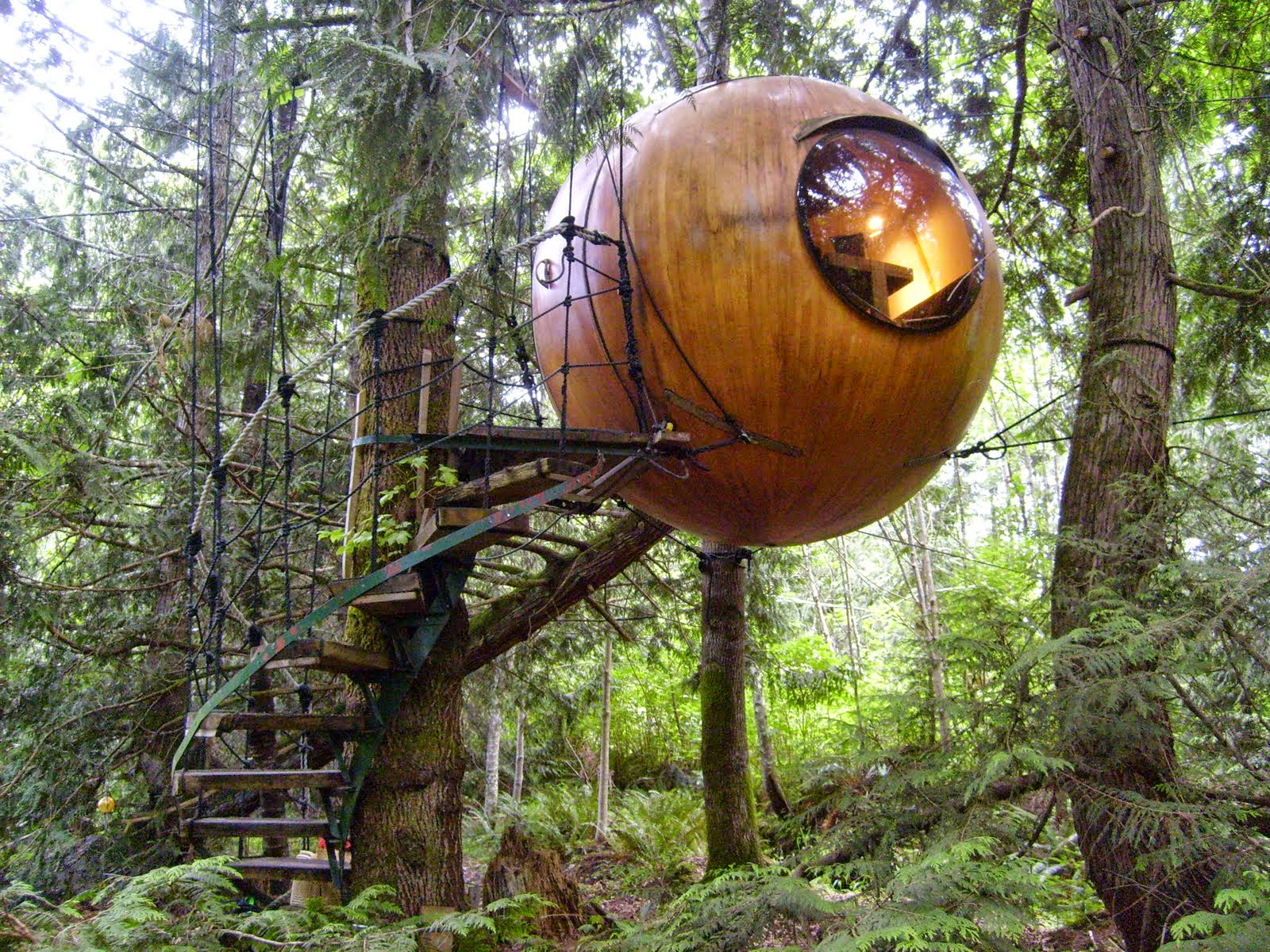 Amazing Tree Homes You Won't believe