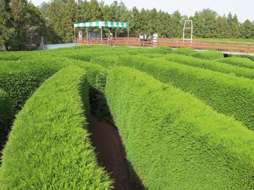 Gimnyeong Maze Park, Jeju