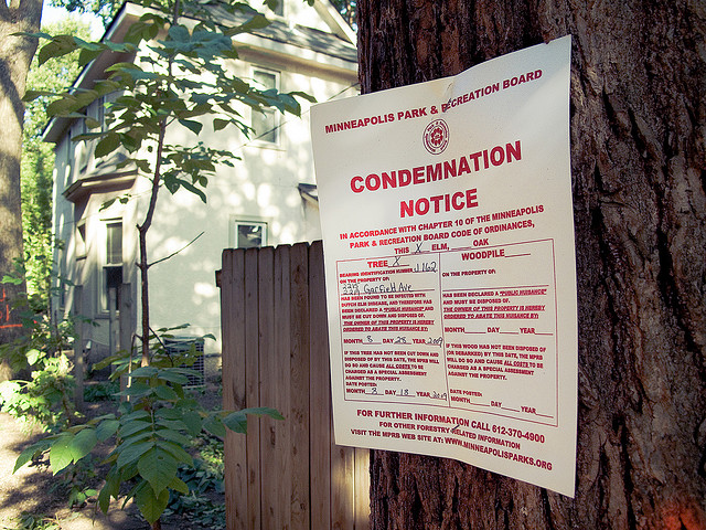 A notice of condemnation nailed to a tree infection with Dutch Elm disease