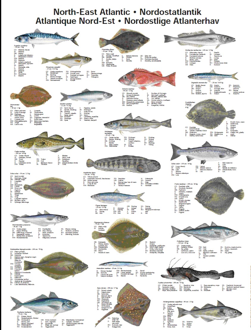 alle vissoorten