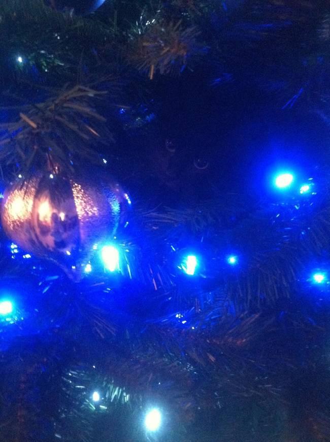 Gatos desafiam as árvores de Natal