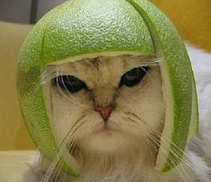 Imágenes Graciosas de Animales,gatos