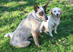Austin (Now Caper) on right enjoys the outdoors with his new pal
