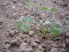 versorgt euch & pflanzt !