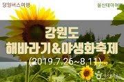 เทศกาลดอกทานตะวัน Taebaek Sunflower Festival