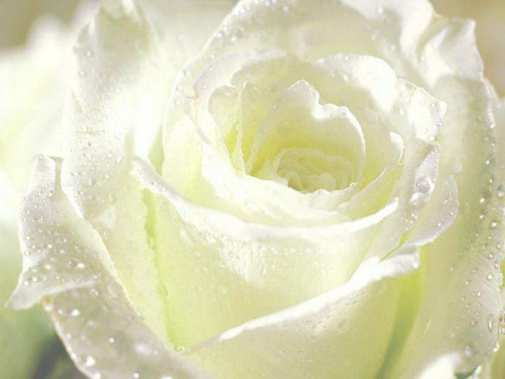 Fotografias de flores blancas - Fotografias y fotos para imprimir