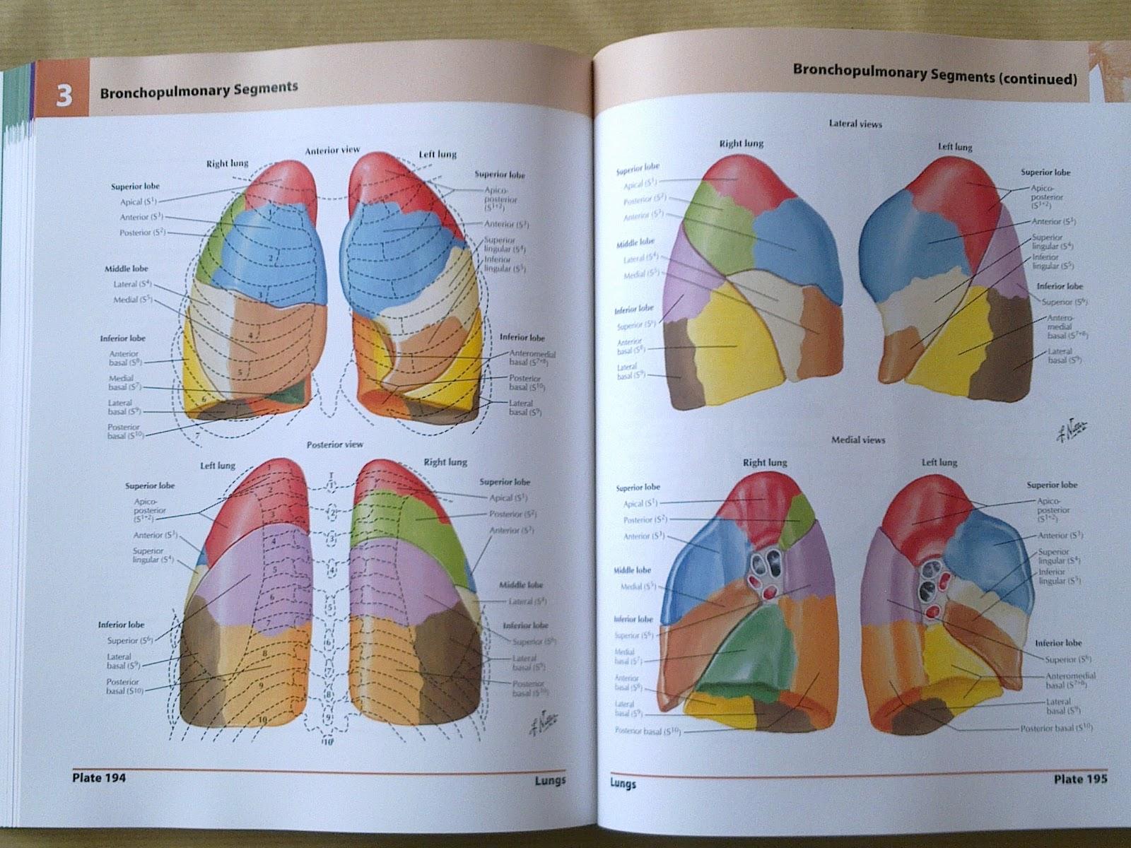Buy netter atlas of human anatomy