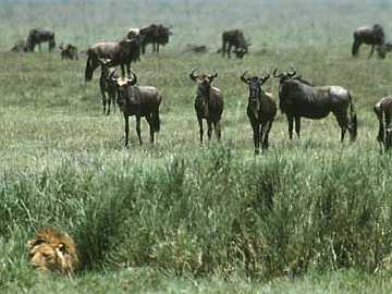 Afrika Tanzanija%252C%2BSerengeti