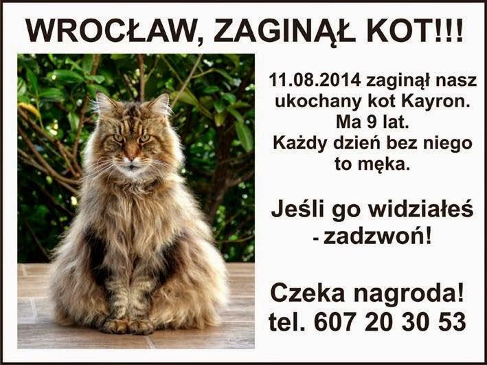 Uwaga Wrocław! Kot jest wciąż poszukiwany!