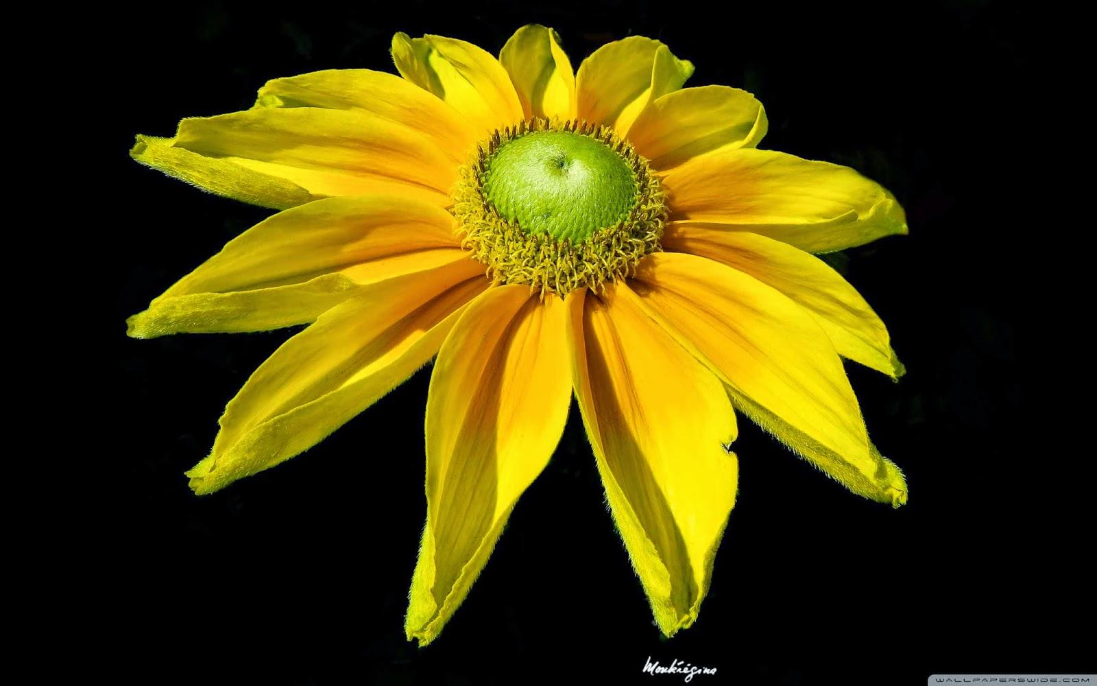 bright yellow flower wallpaper