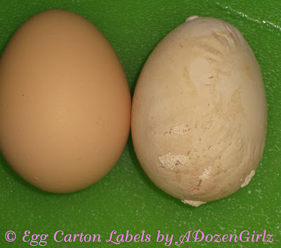 Weird chicken egg- flat sided egg shell explained