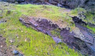 Hidromulch con vegetación a los 6 meses sobre terreno pizarroso.