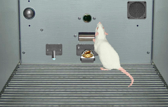 sniffy the virtual rat 1 psychology 100 instructions for sniffy the virtual rat operant conditioning lab in this lab, you will be shaping the behavior of sniffy the virtual rat and teaching him to.