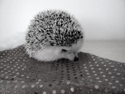 the hedgehog manor aspca emergency poison control 1 888