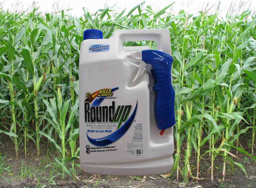 Image of a container of Roundup herbicide with long grass in the background