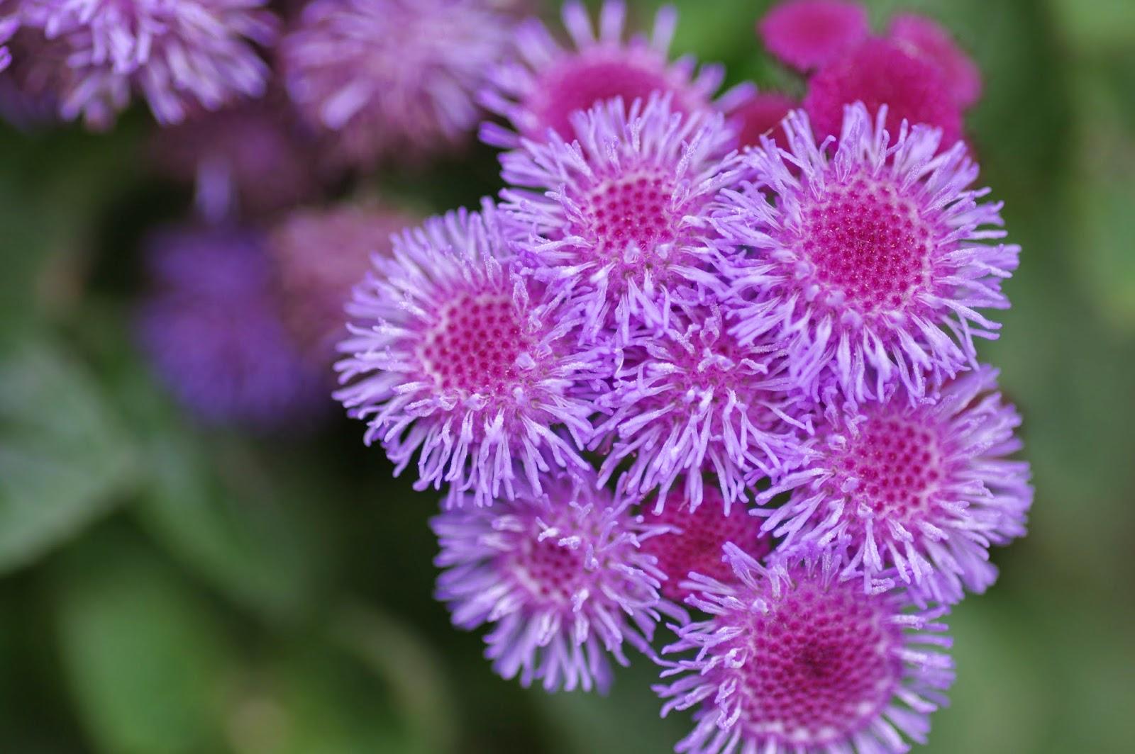 花博公園的花