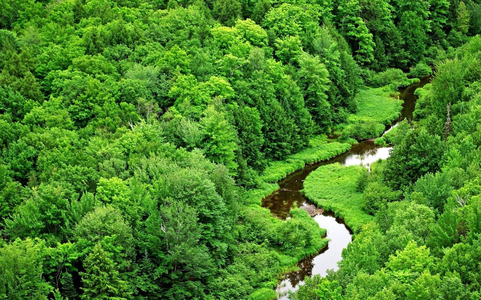 http://3.bp.blogspot.com/-XwpP0rQ0sdk/TtHbDFMlVVI/AAAAAAAABf8/e7YrOkQ1Tq0/s1600/amazon-river1.jpg