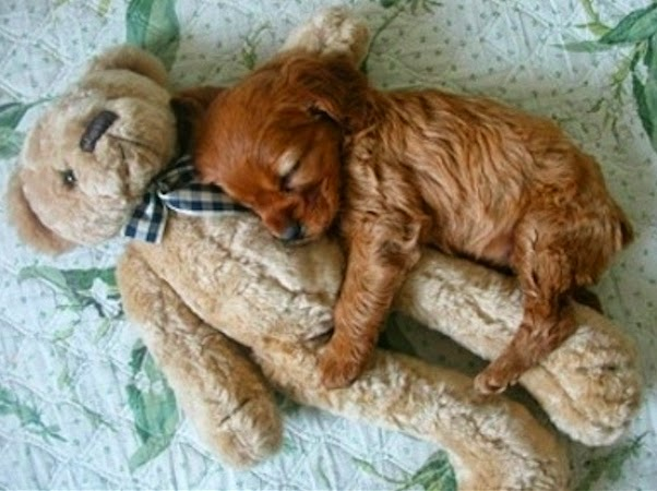 puppies with stuffed animals