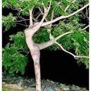 Dançando com a natureza