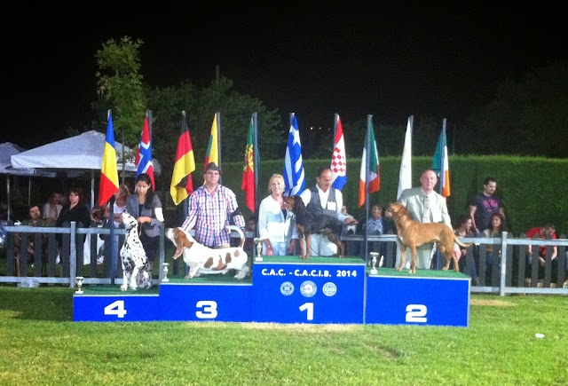 K.O.E. 3 Διεθνείς Εκθέσεις Μορφολογίας CAC CACIB , Μαραθώνας 20-21-22/6/2014