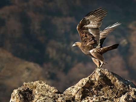 Eagle 09 Parcul Bucegi
