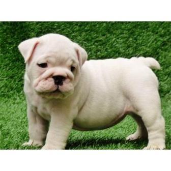 Imagenes tiernas de perritos | Imagenes Para Compartir