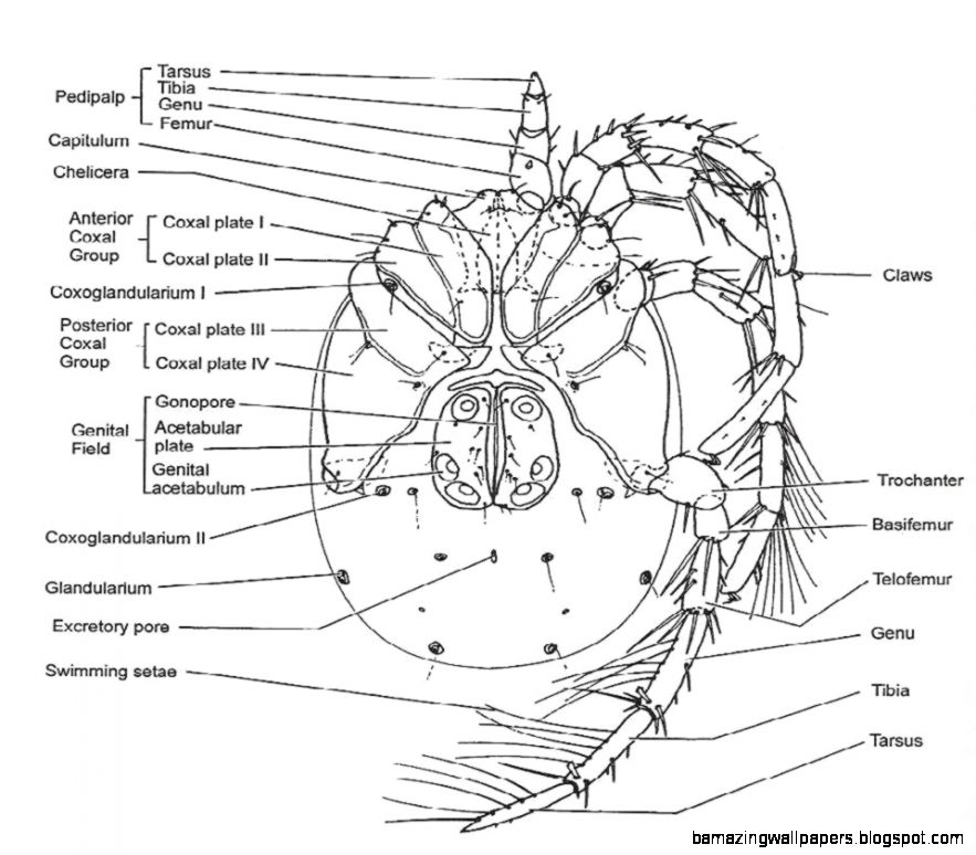 arachnids diagram