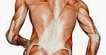 chronic pain & coccyx pain: Piriformis Syndrome- another ...