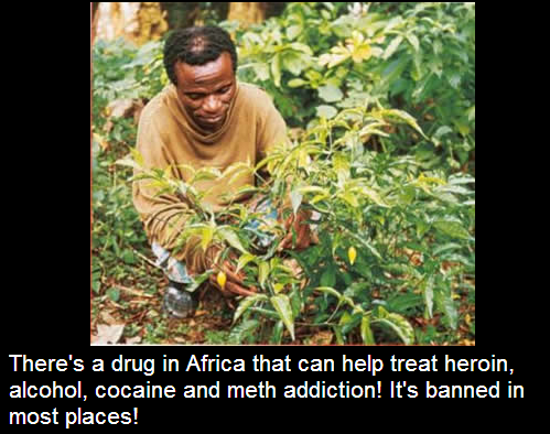 Ibogaine is a hallucinogen made from African plants. Its use has roots ...