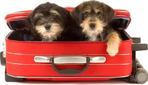 videos de gatos perros de vacaciones
