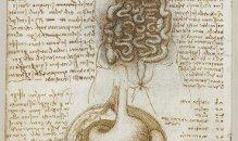 Da+Vinci+Digestive+System Όλες οι ασθένειες προέρχονται από το έντερο. Ιπποκράτης (460 370 π.κ.χ.)
