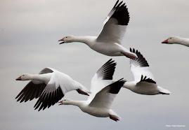 MENOMINEE COUNTY BIRDS