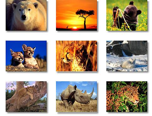 clases de animales diferentes tipos de animales con una pequeña