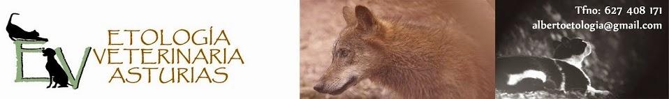 Etología Veterinaria Asturias- Educación canina y comportamiento felino Asturias
