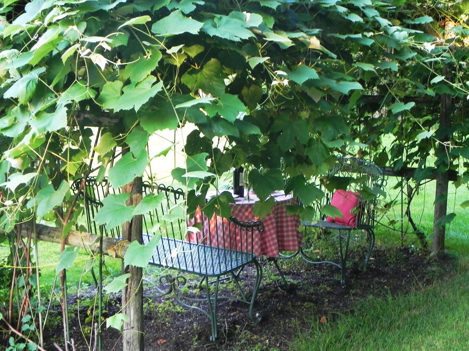 my sister 39 s cottage our diy backyard vineyard