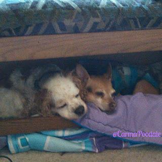Scooby and Jenny cuddling